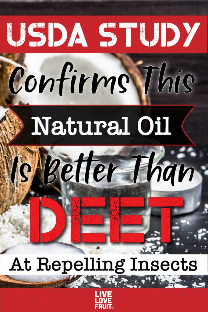Coconut oil in a cup with fresh coconut beside it with text - USDA Study Confirms This Natural Oil is Better Than DEET At Repelling Insects