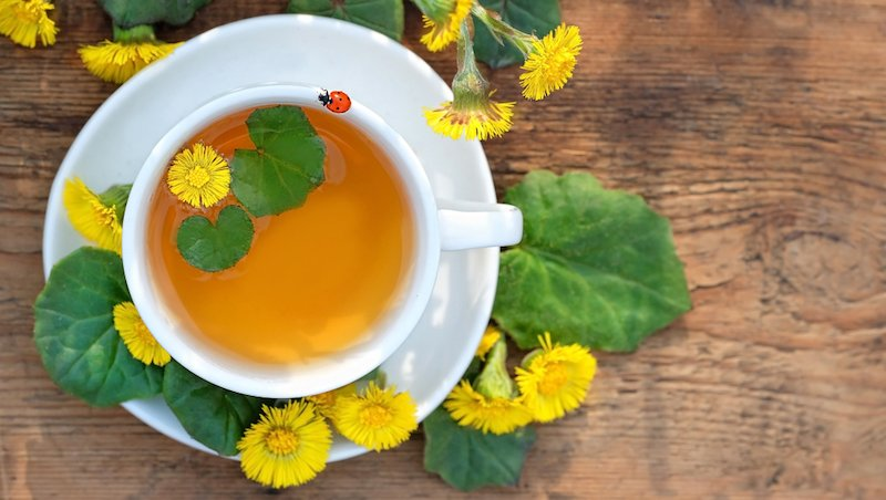 coltsfoot steeped tea with coltsfoot flowers