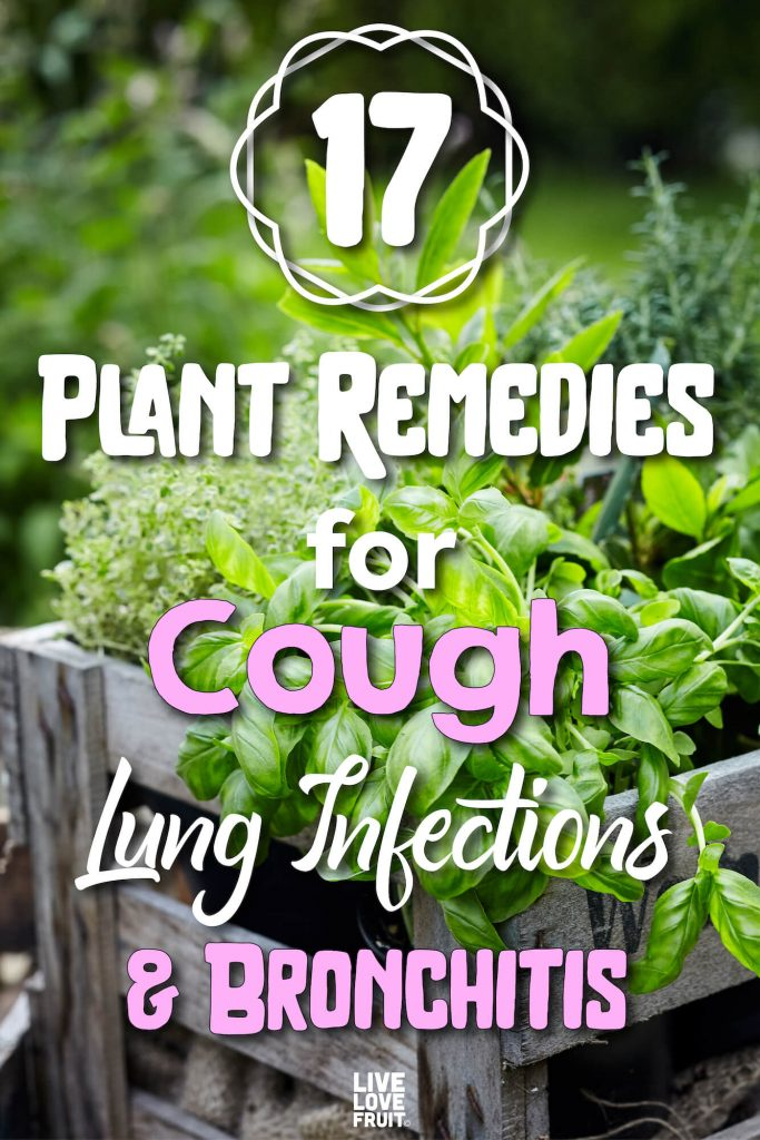 different herbs in large wooden box with text - 17 Plant remedies for cough, lung infections and bronchitis