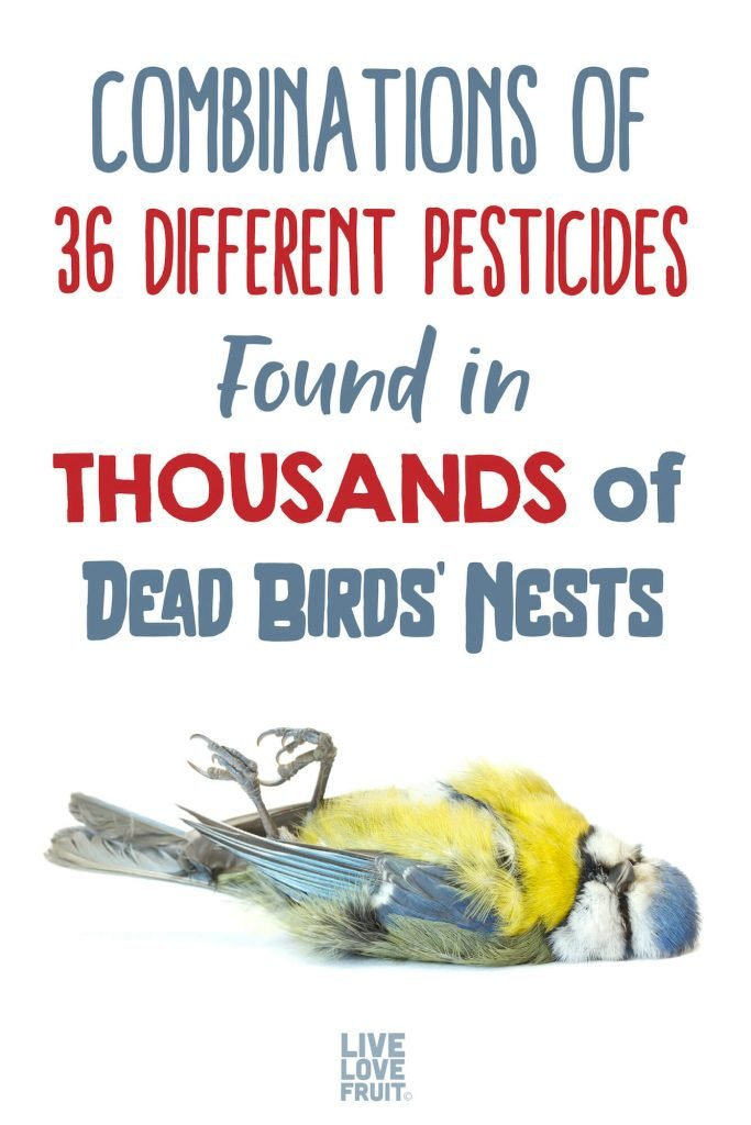 dead bird with text - combinations of 36 different pesticides found in thousands of dead birds' nests