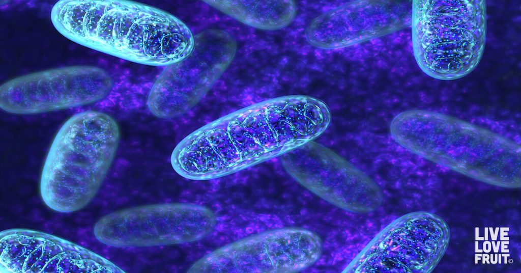 blue and purple stained mitochondria illustrated