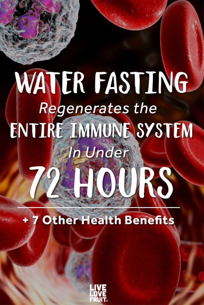 red blood cells with white blood cells in artery or vein with text - water fasting regenerates the entire immune system in under 72 hours + 7 other health benefits