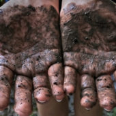 Woman standing with muddy hands from gardening