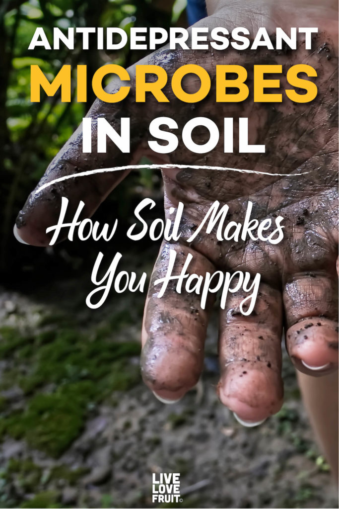 womans hand full of mud after gardening with text - antidepressant microbes in soil: how soil makes you happy