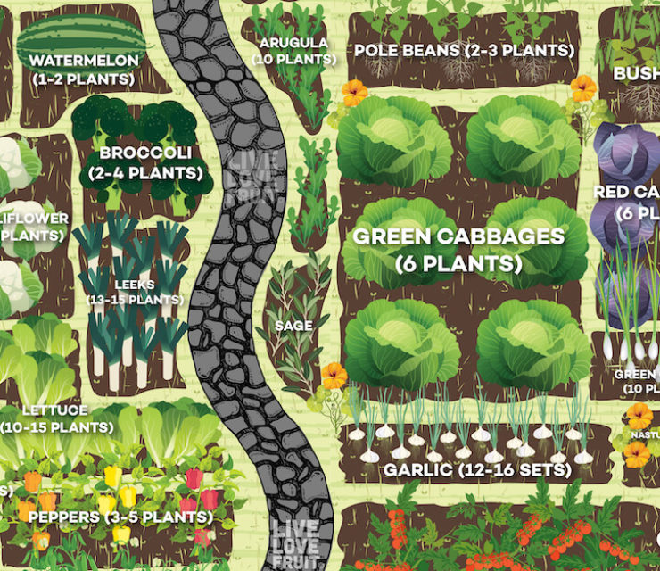 how much vegetables to plant per person in the garden