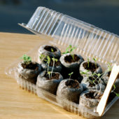 repurposed old plastic container as mini greenhouse for sprouting seeds