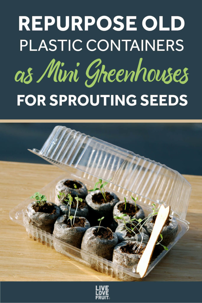 repurposed old plastic container as mini greenhouse with text - repurpose old plastic containers as mini greenhouses for sprouting seeds