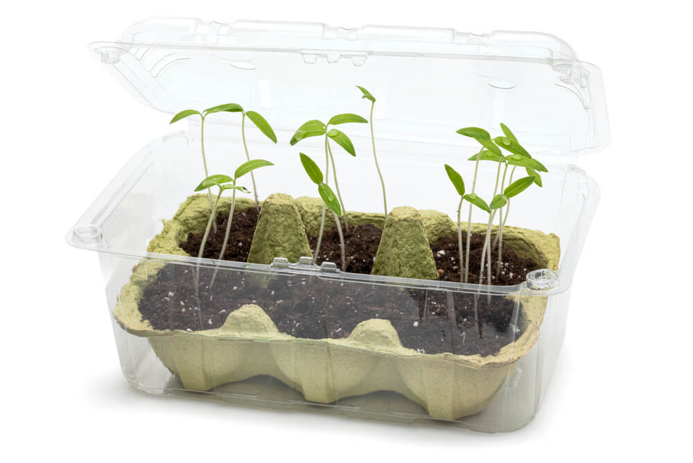 repurposed strawberry container as mini greenhouse for seed starting