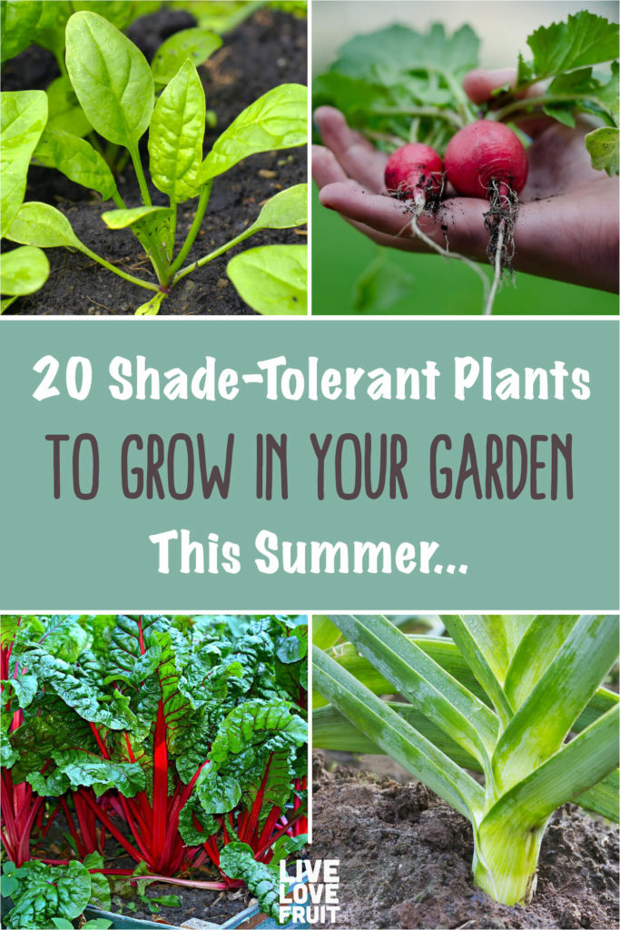 variety of shade-tolerant plants on illustrated graphic with text - 20 shade-tolerant plants to grow in your garden this summer