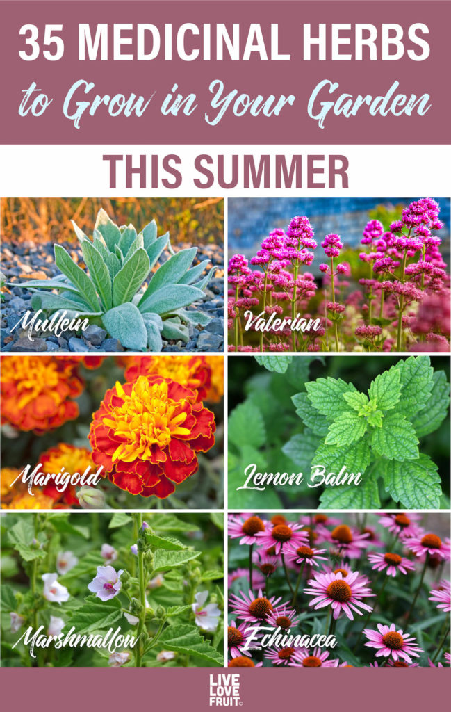 various medicinal herbs you can grow in your garden like mullein, valerian, marigold, lemon balm, marshmallow and echinacea
