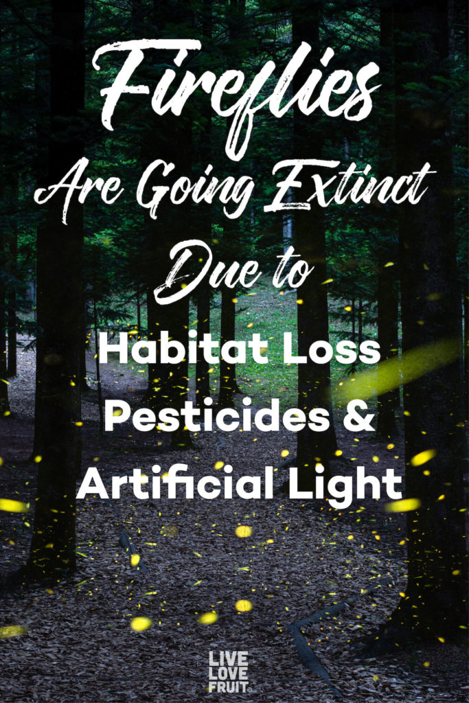 fireflies in wooded forest with text - fireflies are going extinct due to habitat loss, pesticides and artificial light