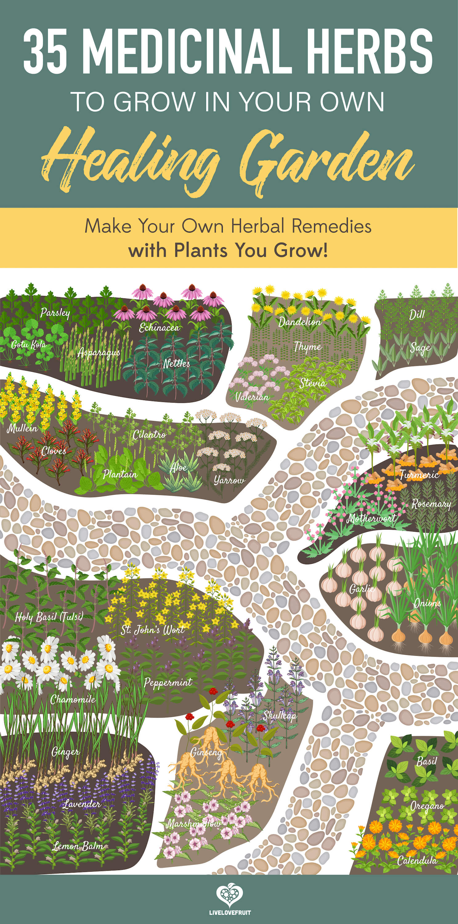 medicinal herb garden illustrated birds eye view with text - 35 medicinal herbs to grow in your own healing garden