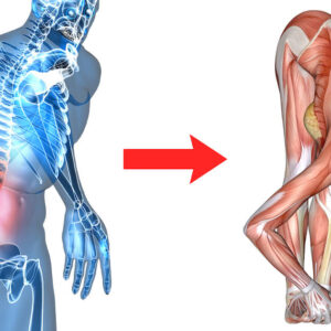 anatomy of man with back pain and then stretching into forward fold